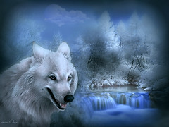 White wolf (maom_1 (Off, most of the time)) Tags: rememberthatmomentlevel4 rememberthatmomentlevel1 rememberthatmomentlevel2 rememberthatmomentlevel3 rememberthatmomentlevel7 rememberthatmomentlevel5 rememberthatmomentlevel6 creativephotocafe thelookorangelevel3 thelookredlevel1 thelookyellowlevel2 thelookpurplelevel4 thelookgreenlevel5 thelookwhitelevel7 thelookbluelevel6