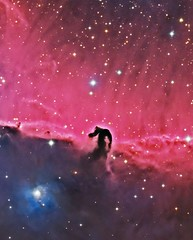 The Horsehead Nebula (Terry Hancock www.downunderobservatory.com) Tags: camera sky monochrome night canon stars photography mono pier back backyard fotografie photos 33 thomas mark space shed science images astro apo m observatory telescope ii nebula astrophotography barnard 5d astronomy imaging ccd universe ic434 cosmos horsehead paramount luminance lodestar teleskop astronomie byo refractor deepsky f55 halpha alnitak astrograph autoguider starlightxpress tmb92ss mks4000 gt1100s qhy9m