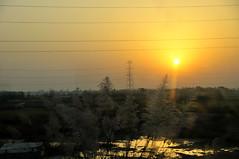 Golden Reservoir (eternal_ag0ny) Tags: new orange sun india lake holiday reflection tree water yellow train sunrise golden pond nikon delhi agra nikkor 18200mm d300s