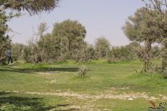 ( ) Tags: emirates khalifa burj            5diii flickrandroidapp:filter=none