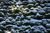 138 (Mayo Takamoto) Tags: winter snow kyoto 京都 冬 kibune kurama 貴船 鞍馬 kihune