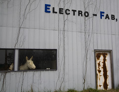 Quit horsin' around and get back to work! (steverichard) Tags: horse usa building industry window animal rural america weird photo al image decay south alabama roadtrip business fabrication cullman fraeky steverichard electrofab