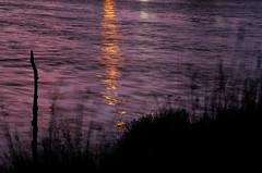 presque la nuit (p'tite nad 2A) Tags: la  couleurs du jour marais nuit tombe