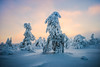 Lapland (Thierry Hennet) Tags: wood blue winter orange cloud mist snow tree ice nature fog zeiss finland landscape outdoors frozen frost sony frosty structure hills snowcapped lapland icy blending luosto a900 coldtemperature cz1635mmf28