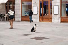 Stubbornness (Scripter81) Tags: street city trip travel winter italy dog cane italia february inverno viaggio trieste friuli 113 triest febbraio trst friuliveneziagiulia stubbornness 2013 d700 cocciuto cocciutaggine scripter81 3canine 113in2013