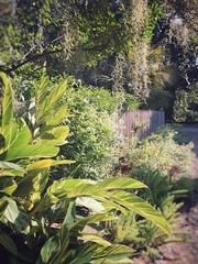Rip Van Winkle Gardens Jefferson Island Louisiana Antebellum Home Mansion History N6VV90 (Dallas Photoworks) Tags: rip van winkle gardens jefferson island louisiana subtropical lush