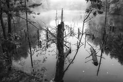 Weiher in Nebel (NatureArt by Wolfgang) Tags: bw sigma dp1s weiher see saarland wasser nebel fog