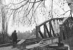 maana de invierno (Viajera Errante) Tags: bn bw nostalgia puentes hombre anciano perro rboles araucana chile invierno winter maana