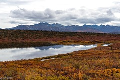 Road Scene 1 - Glenn Highway (Sinar84 - www.captures.ch) Tags: 2016 alaska black blue brown bushes clouds foliage glennhighway green highway hills lake landscape mountains nature orange red reflection road sky travel trees usa water white