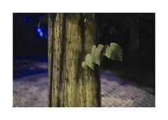 blur1 (lux fecit) Tags: paris blur tree trunk leaves luxembourg night