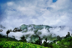 @ Munnar, Kerala, India (Suresh Photography) Tags: munnar kerala nature clouds fog mist trees green mountain beautiful nikon suresh chennai tamilnadu india sureshcprog sureshphotography d5300 landscape tea garden