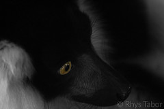 Distance (rhystabor) Tags: selective colour black white grey yellow eye leema lemur animal zoo nature natural distance focal focus canon 650d 200mm f56 1200 iso3200 close nouse snout