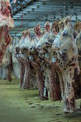 Rungis - March des viandes (marie-adeline.rothenburger) Tags: rungis march viande carcasses boeuf