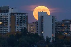 Harvest Moon, Edmonton, Alberta [Explored] (WherezJeff) Tags: 2016 edmonton moon valley yeg autumn full condo building bluehour harvestmoon cityscape