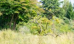 DSC01082.jpg (chagendo) Tags: pflanze makro makrofotografie sonyalpha7ii 90m28g outdoor