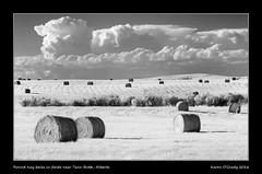 Round hay bales in fields near Twin Butte, Alberta (kgogrady) Tags: clouds field haybales infrared landscape summer twinbutte alberta canada southernalberta xpro1 xf55200mmf3548ois twinbuttealberta rural twinbutteab westerncanada 2016 ab bales blackandwhite blackwhite albertalandscapes bw canadianprairies evening farming cans2s country fujinon fujifilmxpro1 hay fujifilm picturesofalberta nopeople photosofalberta noone