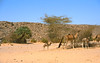 ...in the little village of wour we have to register and hire another guide for the way to bardai... (michael_jeddah) Tags: chad wour tibesti northernchad