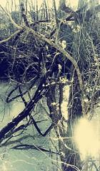 seen into (LauraSorrells) Tags: blue trees painterly river poem emotion here nostalgia vision seeing february metaphor liminality banks paradox longing lightplay rilke etowahriver 2011 saturdaysext