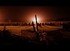 "flowers @ night 46b/52 ""night photography"" (Raf Degeest Photography) Tags: nightphotography leuven canon 2012 week46 522012 52weeksthe2012edition weekofnovember11"