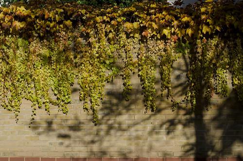 Autumn walls 2 ©  Still ePsiLoN