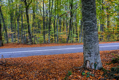 Road in the forest (nikolaos p.) Tags: autumn fall landscape outdoors landscapes roads halkidiki