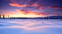 Wilderness Morning (Wolfhorn) Tags: snow cold nature alaska sunrise windy coldfingers wildernessmorning
