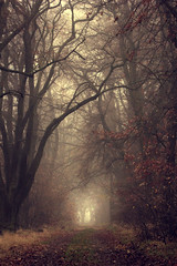 november nebel (nettisrb) Tags: wood autumn trees light mist tree nature leaves fog forest canon way landscape deutschland alley mood nebel path herbst jahreszeit natur foggy atmosphere natura landschaft wald bume weg allee spaziergang