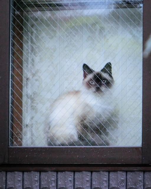 Today's Cat@2012-11-23