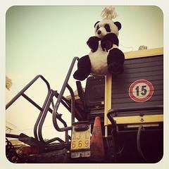 Lavoratori in via di estinzione (MadGrin) Tags: square panda squareformat worker job precari earlybird lavoratori estinzione iphoneography instagramapp uploaded:by=instagram foursquare:venue=4cb40b7e75ebb60c58d0dfad