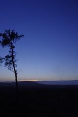 Lonesome pine (Sundornvic) Tags: trees sky sun tree pine clouds sunrise woods shine shropshire sillhouette wrekin hilll haughmondhill