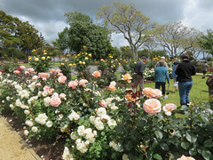 Levin Rose Gardens