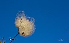 Blowin' In The Wind 326/365 (jac malloy) Tags: austin jac malloy texas tx atx usa canon aphotoaday flickr thingsisee stuffisee austintx austintexas photo photograph photography photovoice austinist austinot austintatious jacmalloy