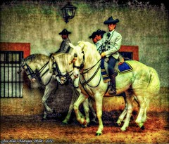 andalucia (soult1) Tags: 2 caballos 1 arte level hdr texturas composicion photohobby lostcontperdidos silverlostcontperdidos rememberthatmomentlevel1 flickrsfinestimages1 flickrsfinestimages2 rememberthatmomentlevel2