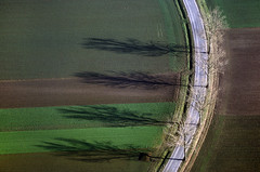 Magic of Autumn (Aerial Photography) Tags: street trees shadow field by landwirtschaft feld r agriculture bume schatten leaftree opf lineoftrees laubbaum strase deciduoustree baumreihe rowoftrees landstrase pfakofen foliagetree 01121994 0404xx09 pfellkofen vgalteglofsheim