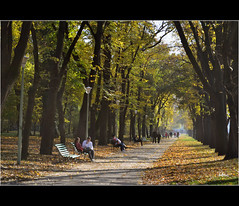 Autumn sunshine (bbic) Tags: park november autumn tree leaves nikon colours natura bucharest bbic
