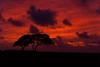 Serengeti Sunrise (RoamingTogether) Tags: hawaii kauai tamron lihue kauaibeachvillas nikond700 283003563