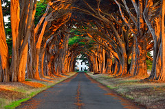 Morning Sunlit Tree Tunnel (David Shield Photography) Tags: california morning trees light color sunrise landscape nikon path explore pointreyes pointreyesnationalseashore treetunnel explored davidshield bestcapturesaoi
