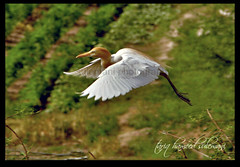 I CAN FLY WITH YOU ........... (TARIQ HAMEED SULEMANI) Tags: travel nature colors birds tariq concordians sulemani tariqhameedsulemani concoedians