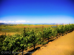 Taking In Sonoma 3 (Shannon Howard Photography) Tags: california travel blur mountains color art nature beautiful beauty northerncalifornia cali relax landscape happy vineyard vines colorful pacific wine earth path walk vibrant cork board country sonoma culture roadtrip charm winery explore valley winetasting napa sonomacounty charming overlook majestic westcoast stroll pathway grapevine winecountry vino digitalphotography discover sonomavalley grapevines tuscan surfsup californians viansa kitchenart winetaste viansawinery marinmagazine restaurantart wineart wineryart restaurantartwork shannonhoward vibrantworld beautifulcali