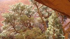 Navajo Arch (iagoarchangel) Tags: light pine garden utah sparkle needles archesnationalpark botany navajoarch