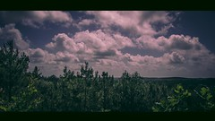 The end (joffibroersen) Tags: trees sky tree nature clouds dark landscape