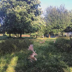 The deer in Clissold park 'lying up'. Chillin.  (Ben Longden) Tags: the deer clissold park lying up chillin
