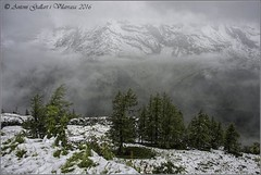I continuem pujant.  (Alps - Austria)   EXPLORE 24-07-2016. (Antoni Gallart i Vilarrasa) Tags: austria alpes alps montanyes montaas mountains nieve neu snow bosque bosc forest d800 niebla boira fog grobglockner paisaje paisatge landscape frio fred cold