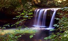Butte Creek Falls, Oregon (Jeffrey Neihart) Tags: jeffreyneihart buttecreek pool creek longexposure silkywater nikon nikond5100 nikon1680284