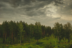 Before the rain (gwilwering) Tags: clouds forest green landscape nature outdoor pine pinetree rain sky trees          tyumen siberia   sonya350