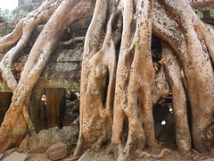 Roots Intrusion (stardex) Tags: taprohm root flora floral temple heritage cambodia siemreap tree