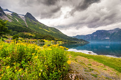 Mountains and water (johanbe) Tags: mountain fjord water snow stryn flower landscape sky beach bkommor fjll landskap berg norge norway tokina wideangle nikon johanbengtsson nature photooftheday iamnikonsummer tokina1116