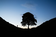 Quiet contemplation (silentandy) Tags: sycamore gap hadrians wall north east tree graphic silhouette uk dusk