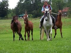 Fohlen (schwarzad) Tags: tiere pferde fohlen