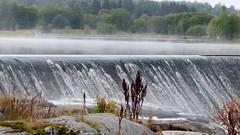 Rapid Halistenkoski in River Aurajoki (Halinen, Turku, 20150906) (RainoL) Tags: 2015 201509 20150906 aurajoki autumn egentligafinland fin finland geo:lat=6046503422 geo:lon=2230584453 geotagged halistenkoski landscape morning rapid river september turku varsinaissuomi bo fog mist
